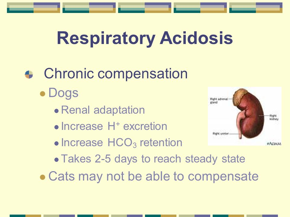 Respiratory Acidosis Metabolic Compensation – Increased HCO 3 H + + HCO 3 H 2 CO 3 H 2 0 + CO 2 -- Allows equation to be pulled back to the right, decreasing H +