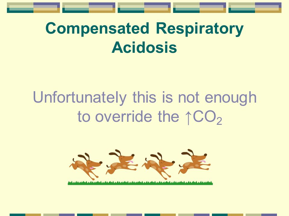 Compensated Respiratory Acidosis H + + HCO 3 H 2 CO 3 H 2 0 + CO 2 End result: Mildly increased H + Mildly decreased pH Increased P CO 2 Increased HCO 3 (Compensation)