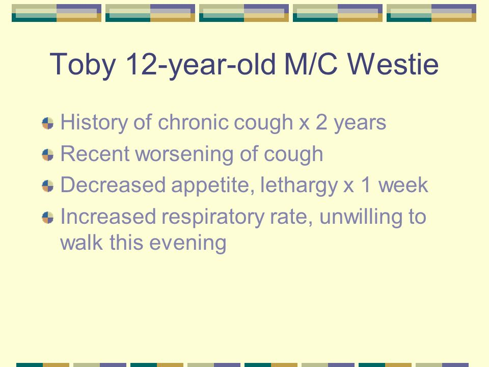 Toby 12-year-old M/C Westie Physical examination Depressed, pale pink mm, 5% dehydrated Tachypnic and slightly dyspnic Thoracic auscultation – fine crackles bilaterally, harsh BV sounds Thoracic radiographs, venous blood gas