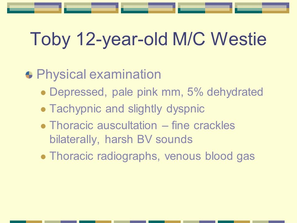Toby 12-year-old M/C Westie Thoracic radiographs – diffuse bronchointerstitial pattern Venous blood gas – pH 7.35 PCO2 – 43 HCO3 - 30