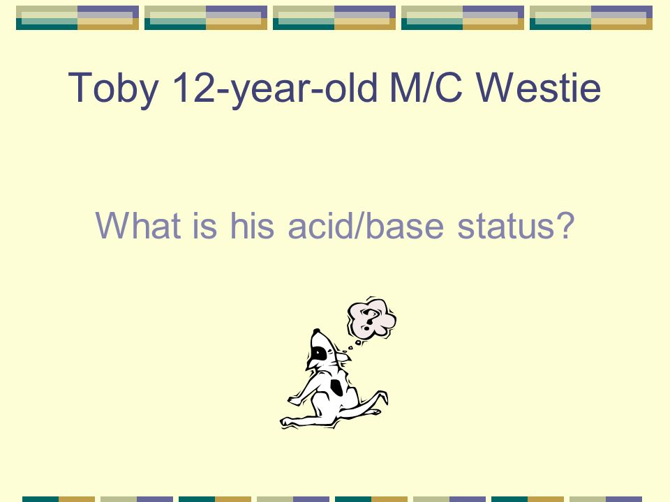 Toby 12-year-old M/C Westie pH 7.35 PCO2 – 43 HCO3 - 30 Classified as a compensated respiratory acidosis