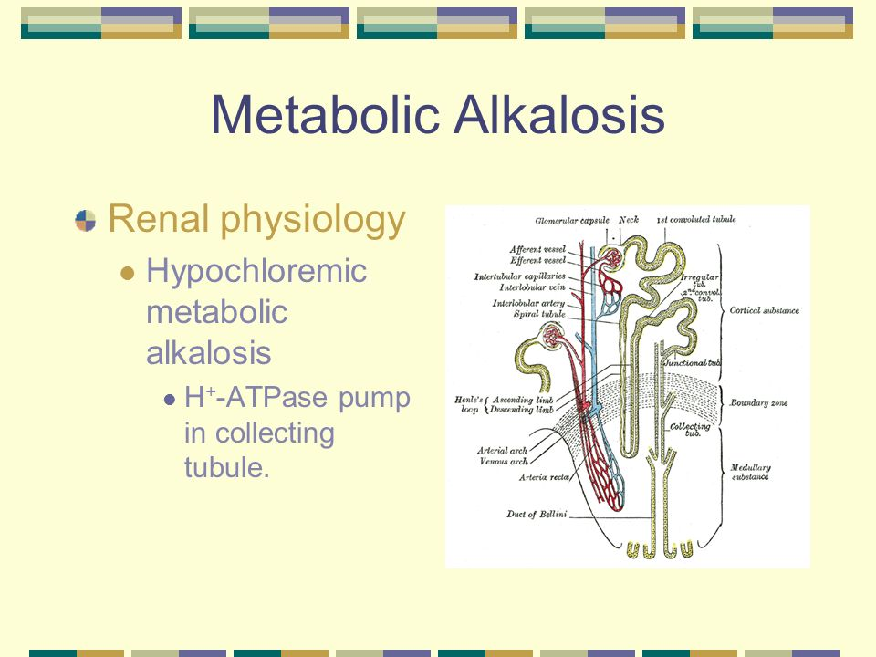 Metabolic Alkalosis Renal physiology Hypokalemia Increased H + /K + exchange leading to influx of H + into cells.
