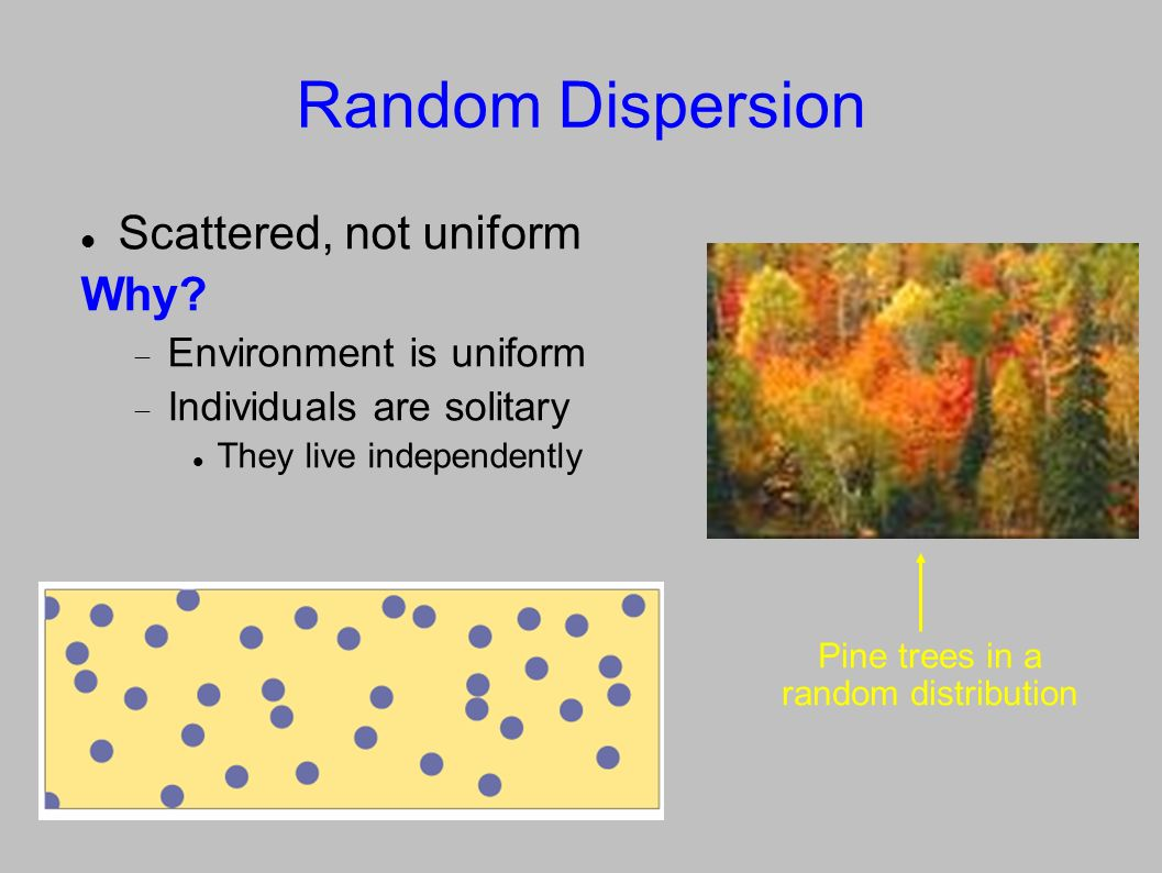 Uniform Dispersion About equal distance apart, forming a pattern Why.