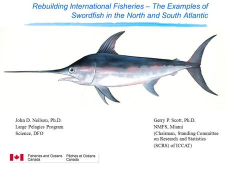 Rebuilding International Fisheries – The Examples of Swordfish in the North and South Atlantic John D. Neilson, Ph.D. Large Pelagics Program Science, DFO.