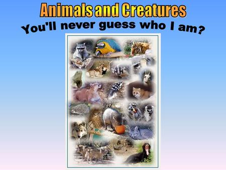 Safari Animals & Animals & Creatures Baby Animals & Animals & Creatures Dangerous Animals & Animals & Creatures Tame Animals & Animals & Creatures Groups.
