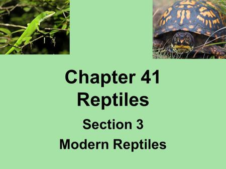Section 3 Modern Reptiles