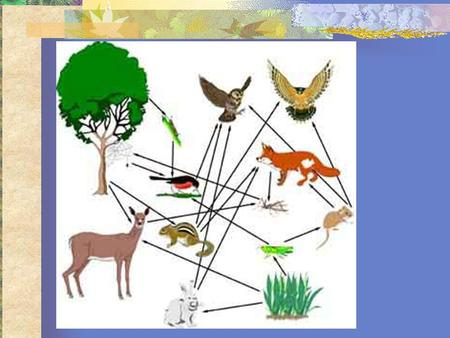 Biomes A group of ecosystems with similar climates and organisms.