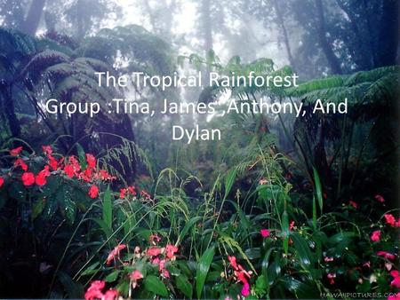 The Tropical Rainforest Group :Tina, James,Anthony, And Dylan.