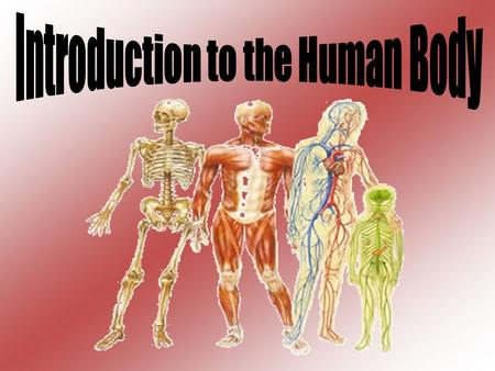 Anatomy: study of structure (morphology) of body parts and how they are organized.