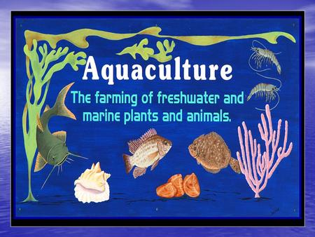 The husbandry of marine or saltwater organisms Mariculture.