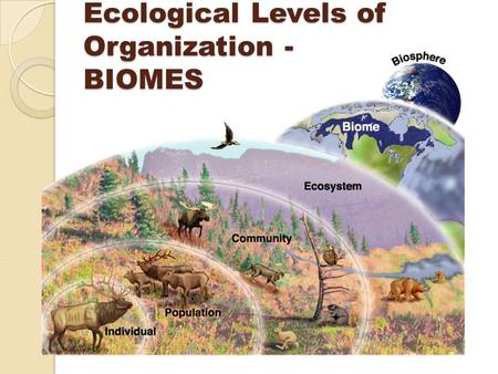 Ecological Levels of Organization - BIOMES. Earth's Biomes <strong>Tropical</strong> & Temperate Rain <strong>Forest</strong> Desert Grassland / Savanna / Steppe / Prairie (Temperate)