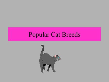Popular Cat Breeds. * One of the oldest breeds known * Descendant of Egypt and worshiped as sacred * Extremely affectionate, quiet, highly intelligent,