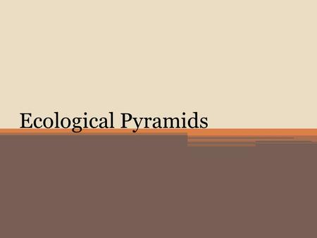 Ecological Pyramids. Three types of ecological pyramids  Pyramid of Energy  Pyramid of Biomass  Pyramid of Numbers.
