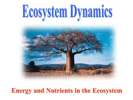 Ecosystem Dynamics Energy and Nutrients in the Ecosystem.
