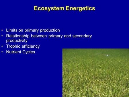 Ecosystem Energetics Limits on primary production Relationship between primary and secondary productivity Trophic efficiency Nutrient Cycles.