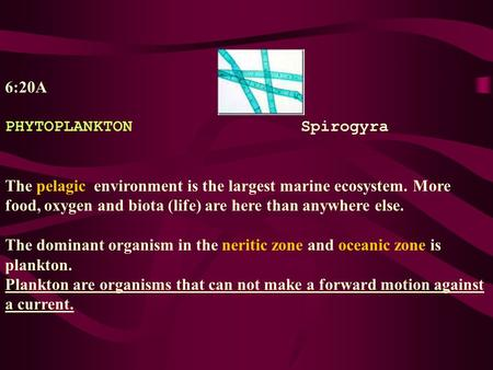 6:20A PHYTOPLANKTONSpirogyra The pelagic environment is the largest marine ecosystem. More food, oxygen and biota (life) are here than anywhere else. The.