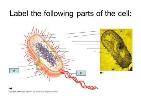 Label the following parts of the cell:
