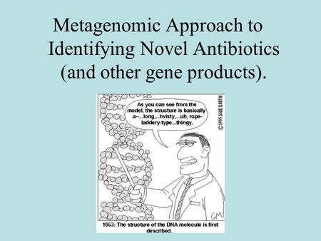 Metagenomic Approach to Identifying Novel Antibiotics (and other gene products).