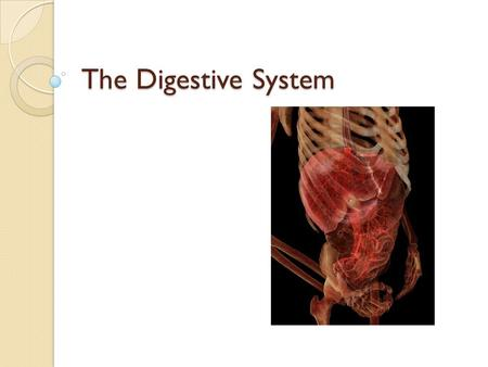 The Digestive System.  We have now started to look at various systems in the body and how individual organs make up these systems.  But how did we get.