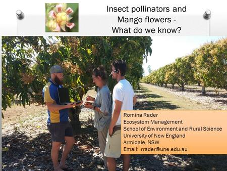Romina Rader Ecosystem Management School of Environment and Rural Science University of New England Armidale, NSW   Insect pollinators.