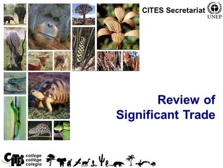 1 Review of Significant Trade CITES Secretariat. 2 Overview Origins of the Significant Trade Review Process The process explained.
