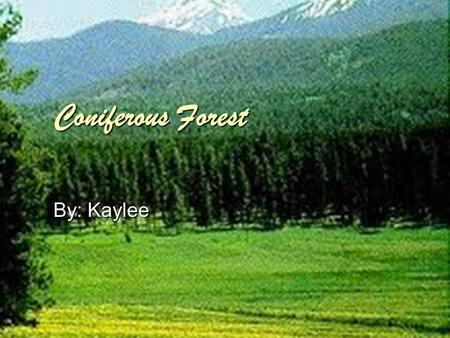 Coniferous Forest By: Kaylee. Location  Coniferous Forests cover approximately 15% of the Earths surface.  Earth's large forests of coniferous extend.