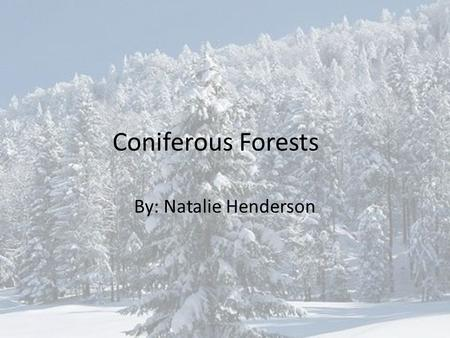 Coniferous Forests By: Natalie Henderson. What is A Coniferous Forest? A forest made primarily of conifers, or trees producing needles and or cones –