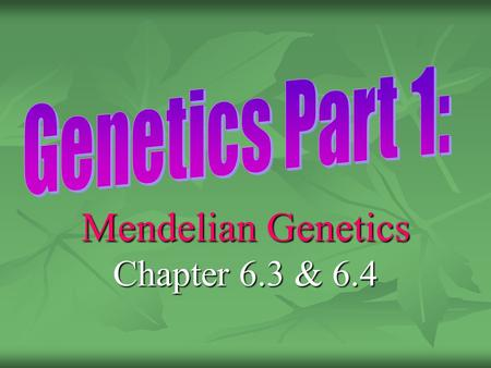 Mendelian Genetics Chapter 6.3 & 6.4. Gregor Mendel Gregor Mendel: Father of genetics, Gregor Mendel: Father of genetics, studied pea plants. Genetics: