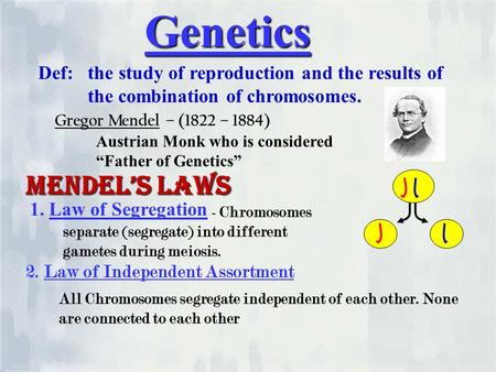 Genetics Def: the study of reproduction and the results of the combination of chromosomes. Gregor Mendel – (1822 – 1884) Austrian Monk who is considered.