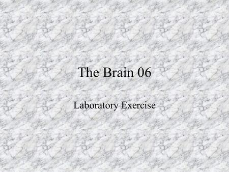 The Brain 06 Laboratory Exercise.