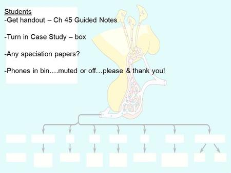 Students Get handout – Ch 45 Guided Notes Turn in Case Study – box