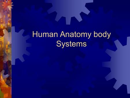 Human Anatomy body Systems. Integumentary system 1. Organs 1. Skin 2. Hair 3. Nails 4. Sweat glands 5. Sebaceous glands.