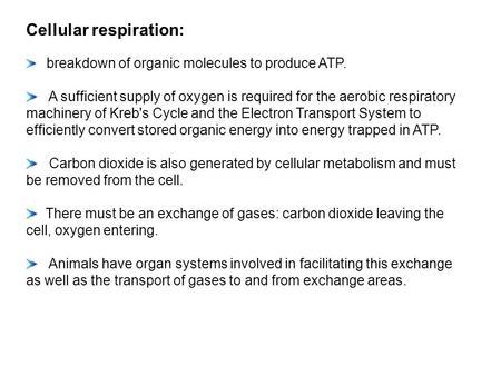 respiration essay questions