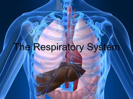 The Respiratory System. Process by which O 2 and CO 2 are exchanged between cells, the blood, and air in the lungs = respiration –The human respiratory.