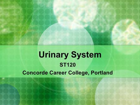 Urinary System ST120 Concorde Career College, Portland.
