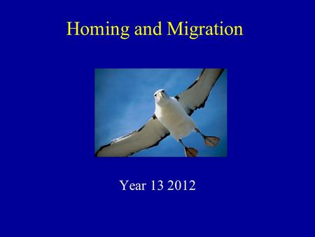 Homing and Migration Year 13 2012.