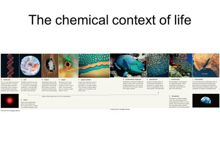 The chemical context of life. Key concepts –Matter consists of chemical elements in pure form and in combinations called compounds –An element's properties.