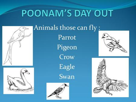 Animals those can fly : Parrot Pigeon Crow Eagle Swan.