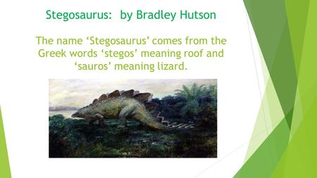 Stegosaurus: by Bradley Hutson The name 'Stegosaurus' comes from the Greek words 'stegos' meaning roof and 'sauros' meaning lizard.