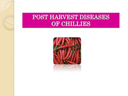 POST HARVEST DISEASES OF CHILLIES.