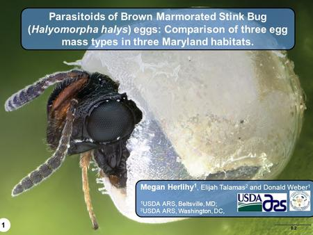 Parasitoids of Brown Marmorated Stink Bug (Halyomorpha halys) eggs: Comparison of three egg mass types in three Maryland habitats. Megan Herlihy1, Elijah.