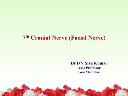 7th Cranial Nerve (Facial Nerve)