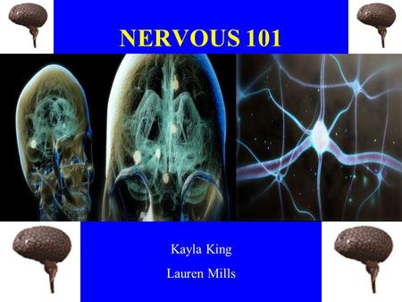 NERVOUS 101 Kayla King Lauren Mills. Importance Sends messages throughout the body. –5 senses.