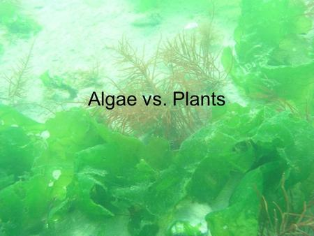 Algae vs. Plants. What are algae? Photosynthesizing protists. All contain up to 4 kinds of chlorophyll. Unicellular and multicellular.