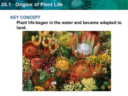 KEY CONCEPT  Plant life began in the water and became adapted to land.