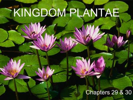 KINGDOM PLANTAE Chapters 29 & 30. Kingdom: PLANTAE Characteristics Multicellular Mostly photosynthetic, contain chlorophyll and other pigments - some.