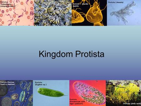 "Kingdom Protista. Eukaryotic ""Catch-all"" Kingdom Contains organisms that resemble organisms in the kingdoms animalia, plantae, and fungi. Can be autotrophs."