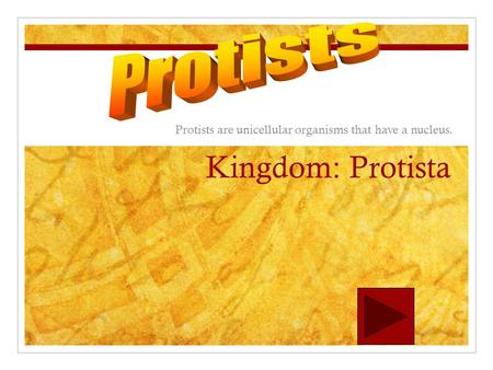 Kingdom: Protista Protists are unicellular organisms that have a nucleus.