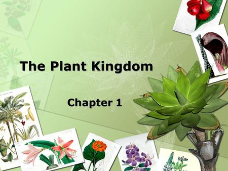 The Plant Kingdom Chapter 1. Evolution of Plants 3.5 billion years ago = bacteria & blue/green algae. 1 billion years ago = green algae 600 million years.