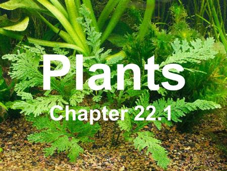 Plants Chapter 22.1.